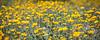 desert flowers-8319
