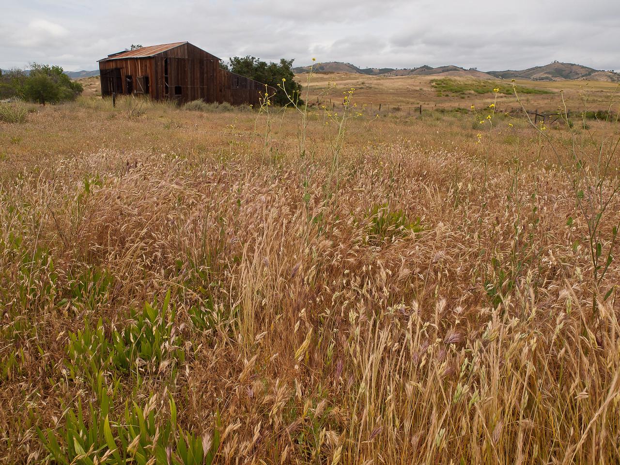 Abandoned barn in Soledad, CA.