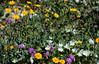 desert flowers-8344