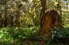 sunlit forest 2-2390
