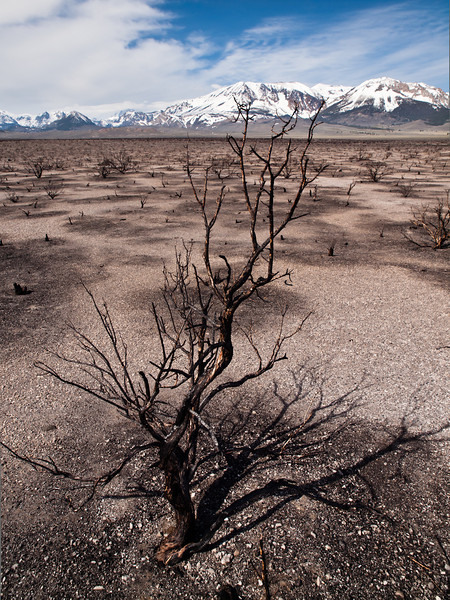 This recently burned section of desert shows how really full of life it normally is.  The wind was blowing so hard though I just dashed out of the car to take a few shots.  I felt sand-blasted after a while.  50 mph gusts easy.