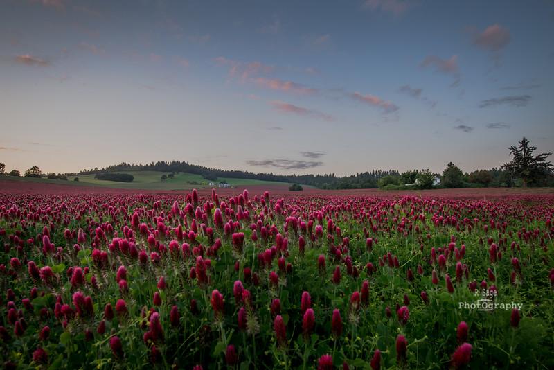 hwy 99 clover field-0420
