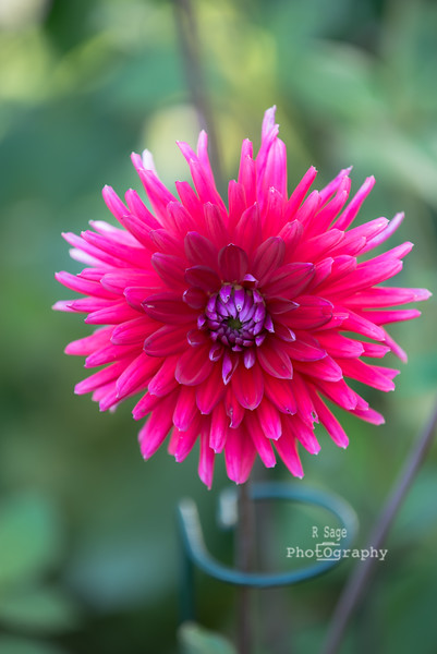 chris's flowers-2748