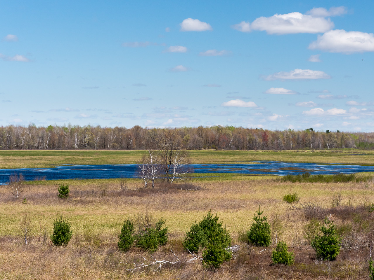 The view from one of the very tall viewing platforms at Sandhill Wildlife Preserve. It was so windy that hand holding the camera was steadier than the tripod would have been.