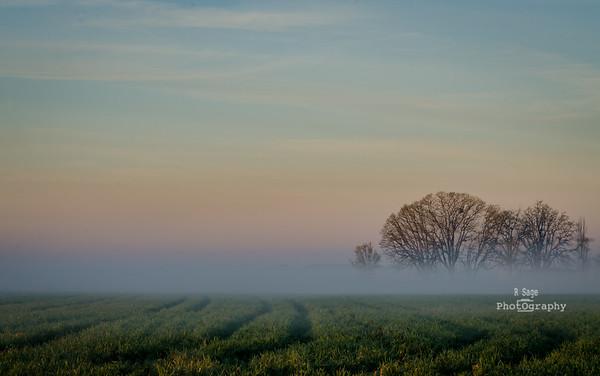 spring morning-9579
