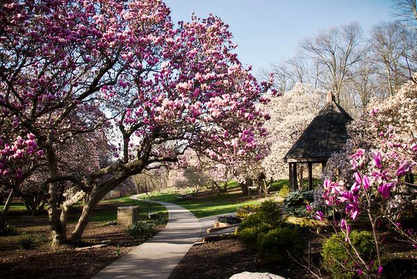 Spring at Eden Park