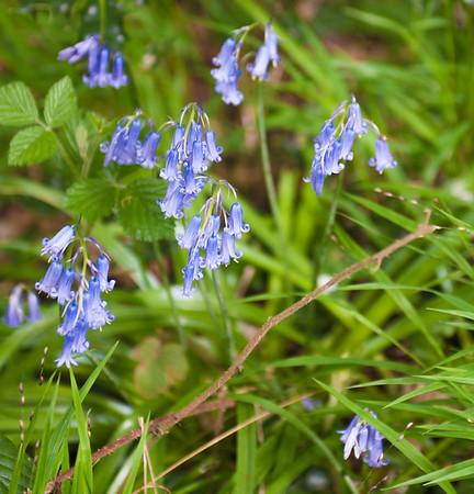 Spring in Buckinghamshire