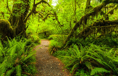 Path in Hoh Rainforest