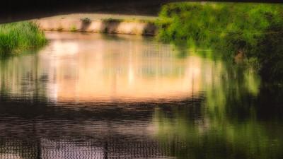 Spring on the River Chelmer
