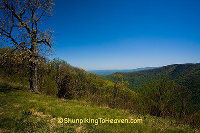 Early Spring View from the Blue Ridge Parkway, Floyd County, Virginia