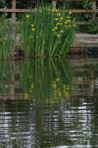 Danbury Common-5336