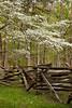 Dogwood and Split Rail Fence, Mill Springs Battlefield, Pulaski County, Kentucky