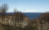 April 12.  Mount Susitna from the Coastal Trail
