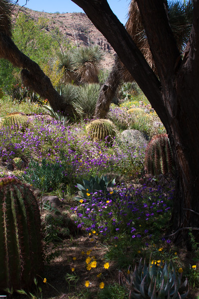 Springtime in the desert