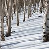 Aspen Tracks
