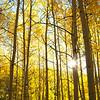 Fall Sun Flare