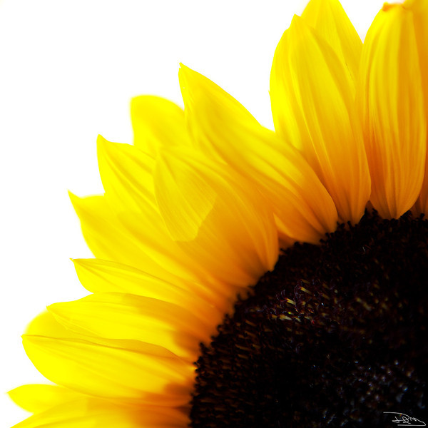 Yellow Moment