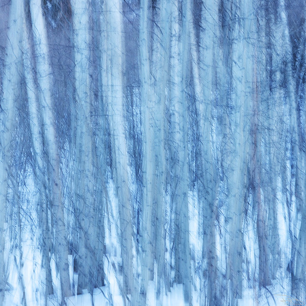 Telluride Frost
