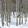 Aspens Big Cottonwood