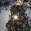 A leafy sun - Cannock Chase