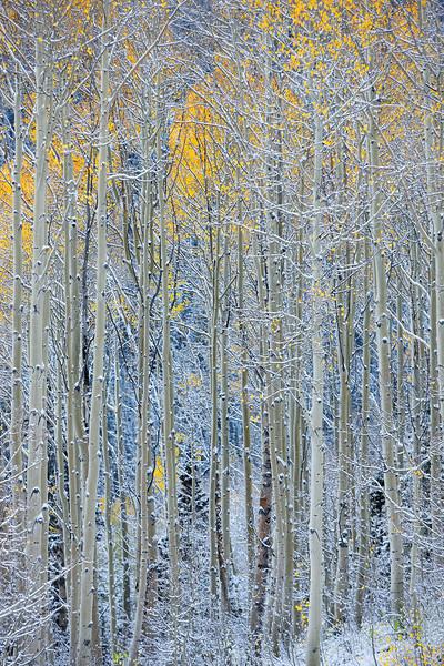 Radiant Snow