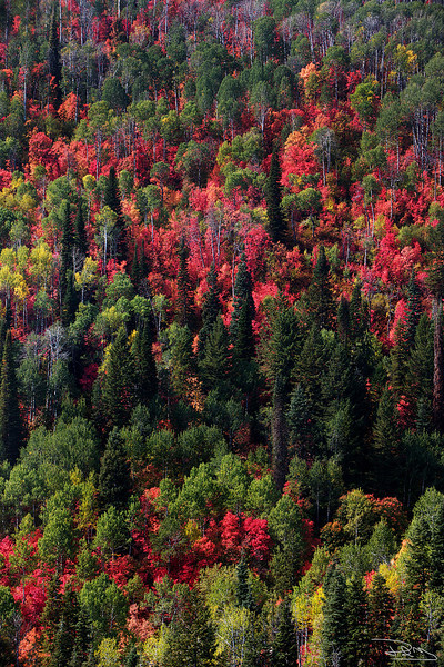 Colors of the Wasatch VERT