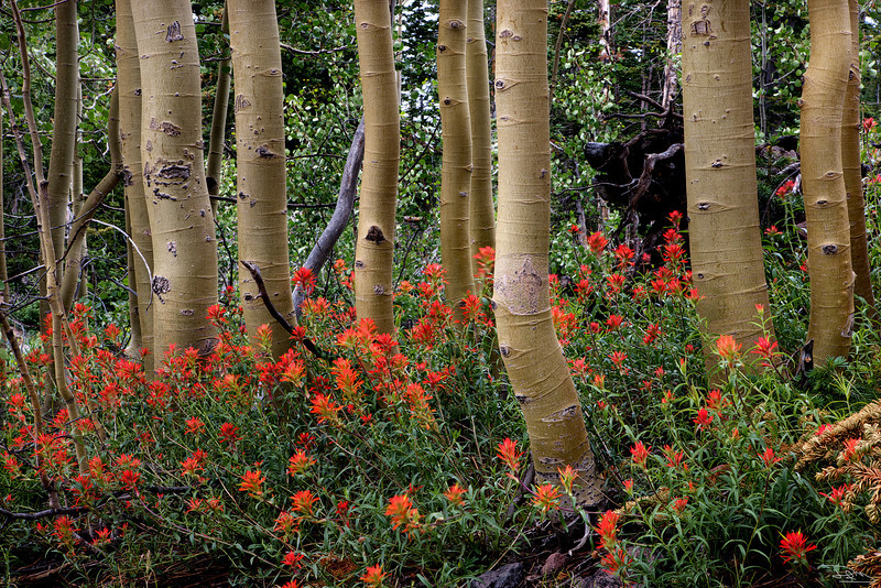 Paintbrush Forest