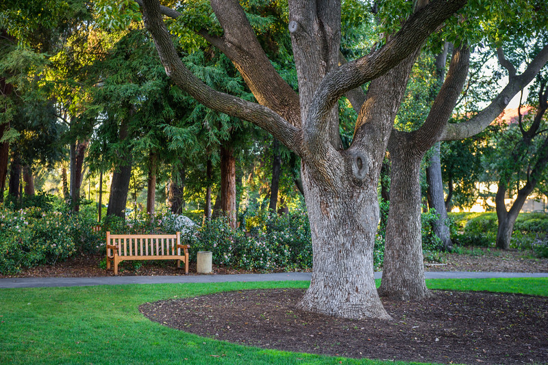 """Tree and Bench"" Stanford University, Palo Alto, California"