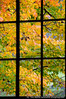 """Window into Fall"""