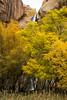 Calf Creek Falls thru the fall foliage