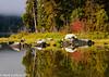 Lake Wenatchee Fall 10-2011
