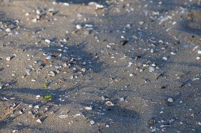 Lindeijer_2012-08-04_195132