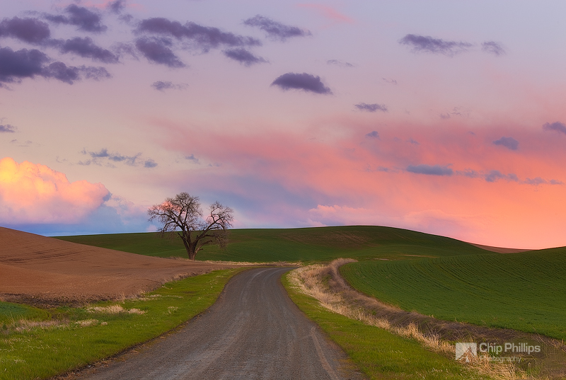 Palouse Country Road #2