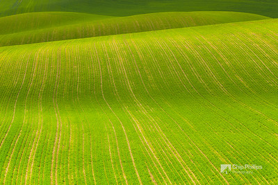 Rolling Green Hills Palouse #1