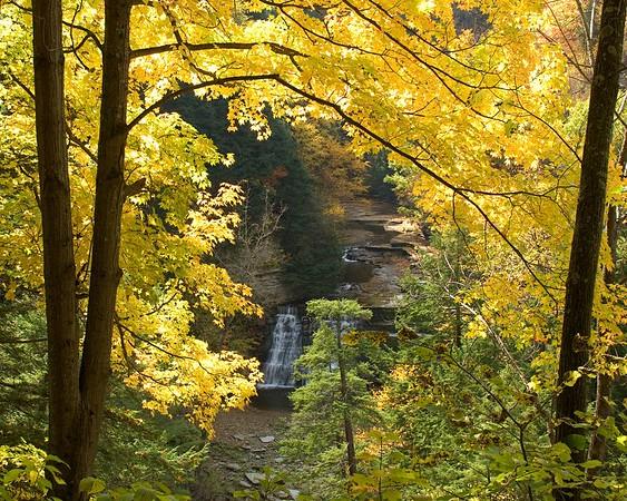 Stony Brook in Autumn