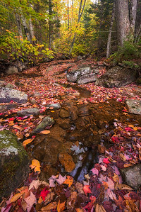 Colorful Blanket of Autumn