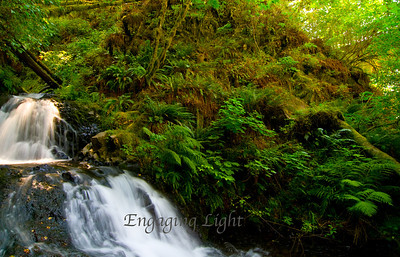 Babbling Brook, Columbia River Gorge, Oregon