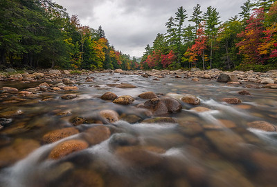 Autumn Colors On The Swift River