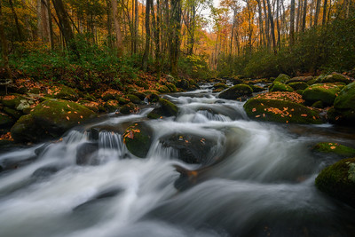 An Autumn Stream In Great Smoky Mountains National Park