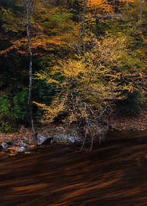 Flowing Leaves In The Smoky Mountains