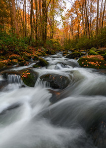 Flowing Autumn Stream In The Great Smoky Mountains National Park