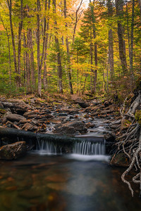 Creek Falls In Autumn Woods