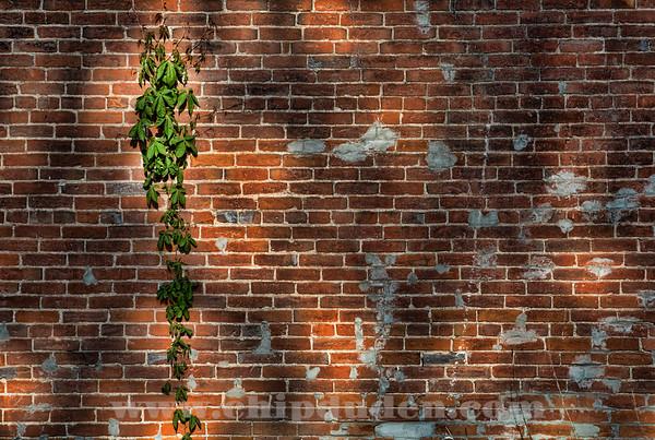Wall Climber_2O7A1541