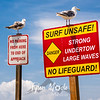 11  G Seagulls on Signs