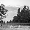 3  G Thin Fog Tree BW