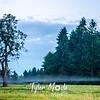 2  G Thin Fog Tree