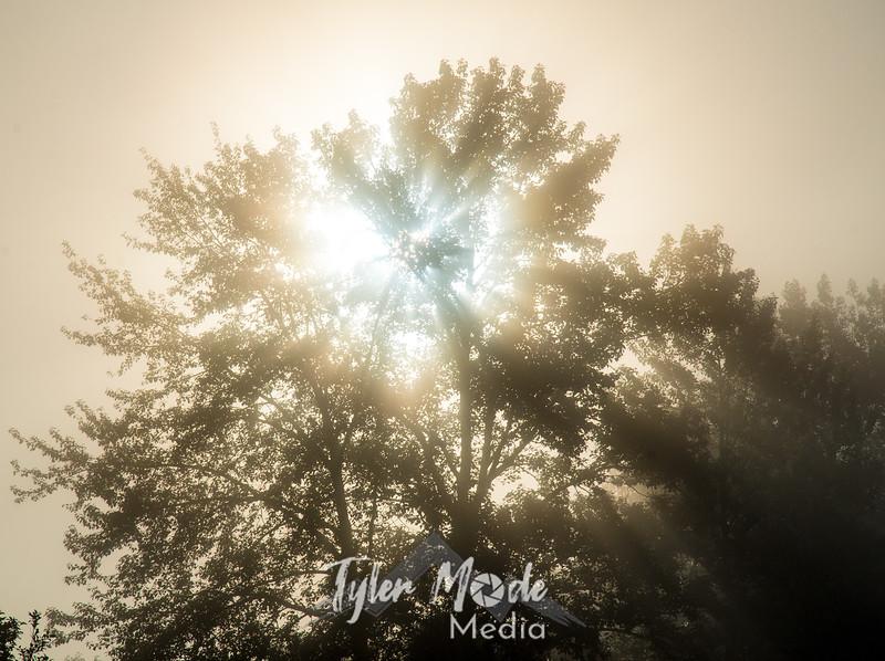 57  G Tree Mist