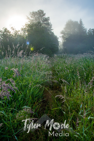 71  G Grass Dew Trail V
