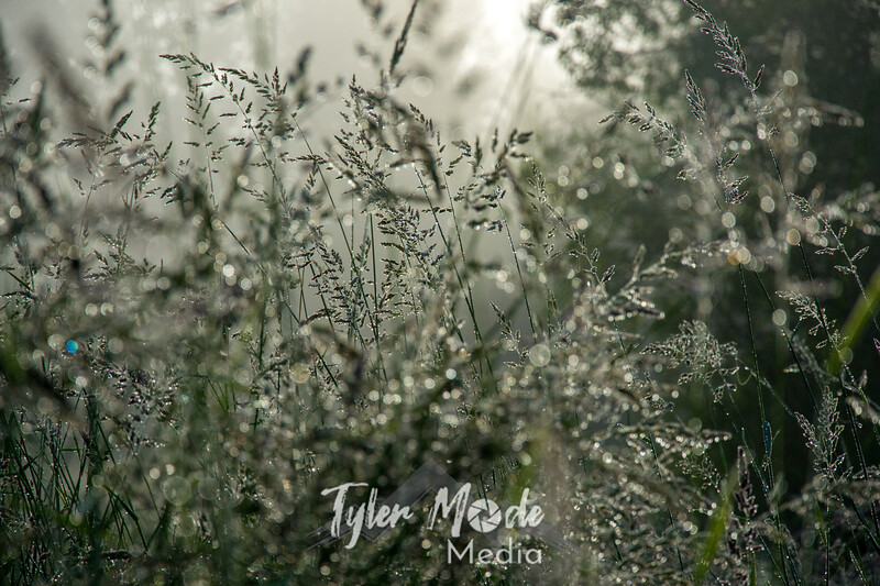 68  G Grass Dew