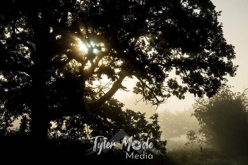 20  G Tree and Mist